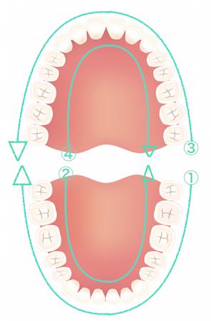歯を磨く順序