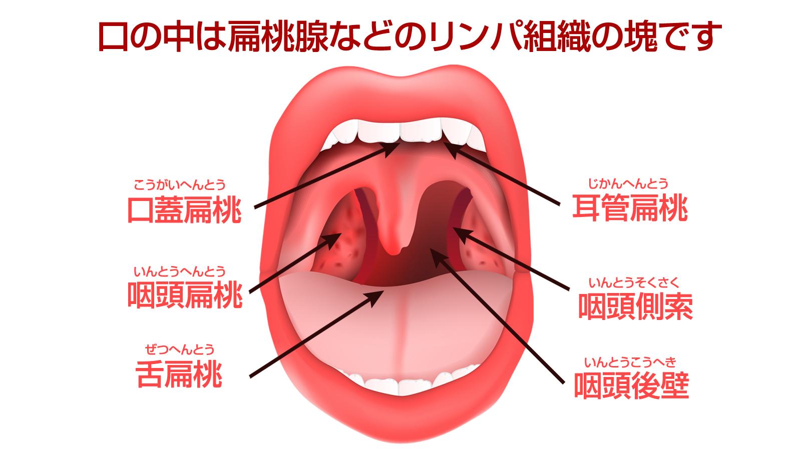 口の中 リンパ組織