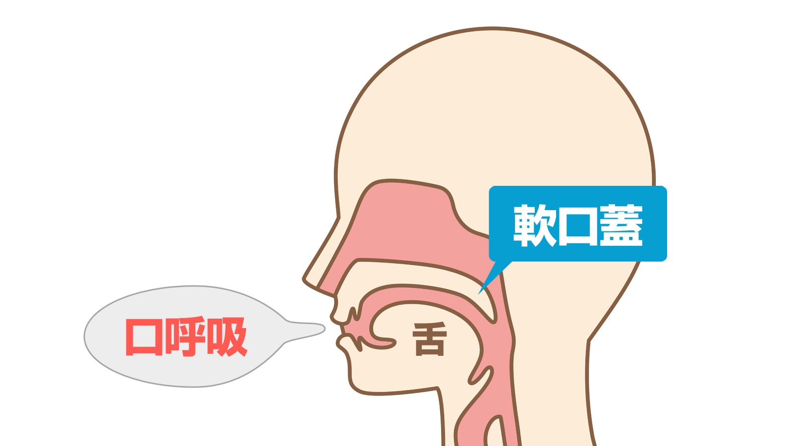 口呼吸 軟口蓋